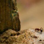 Diferencia entre termitas y hormigas y cómo diferenciarlas