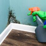 5 formas de limpiar el moho de las superficies más importantes de su hogar