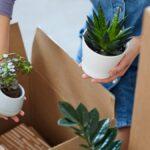 Cómo trasladar plantas a su nuevo hogar sin matarlas