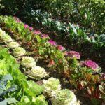 Cómo saber cuántas plantas caben en su jardín antes de gastar dinero