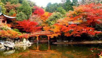 Sfaturi transmise de seniorii japonezi-şansa de a te găsi