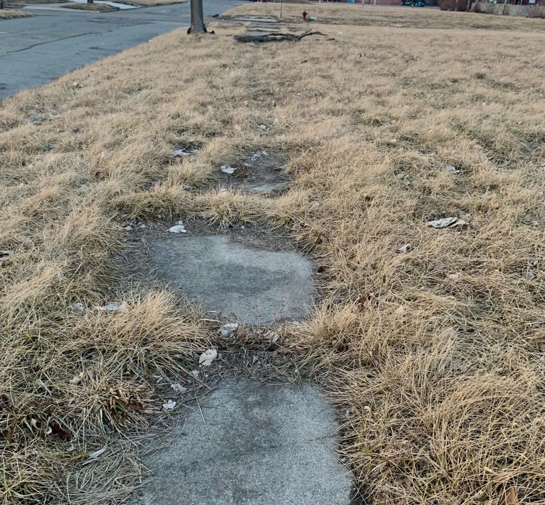overgrown detroit sidewalk