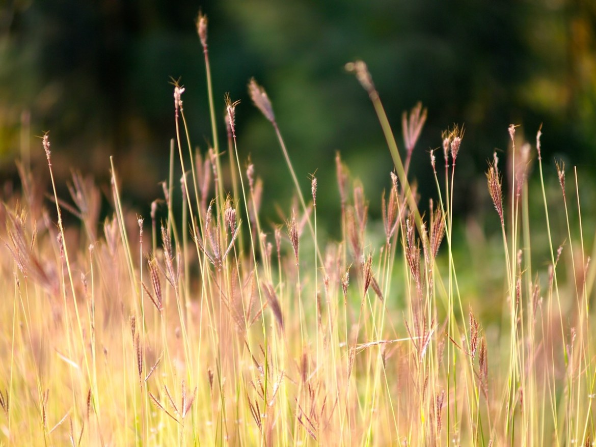 tall grass in meadow