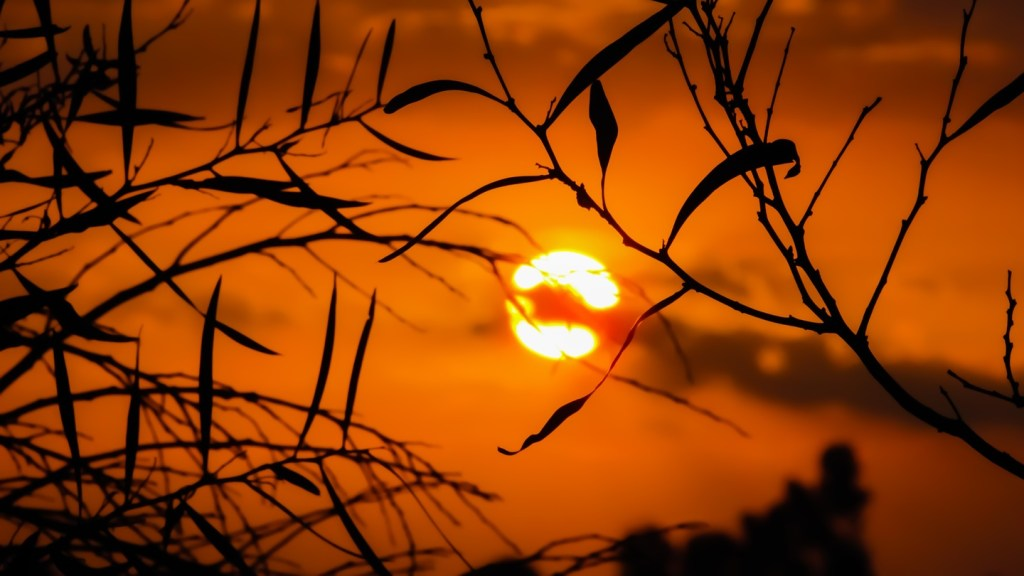 sunset in dark orange sky behind dark tree branches