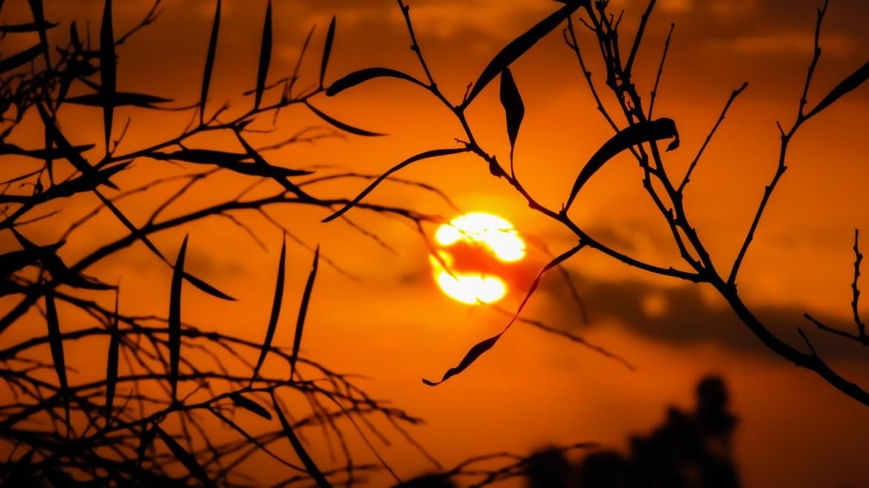 sunset in dark orange sky behind dark tree branches