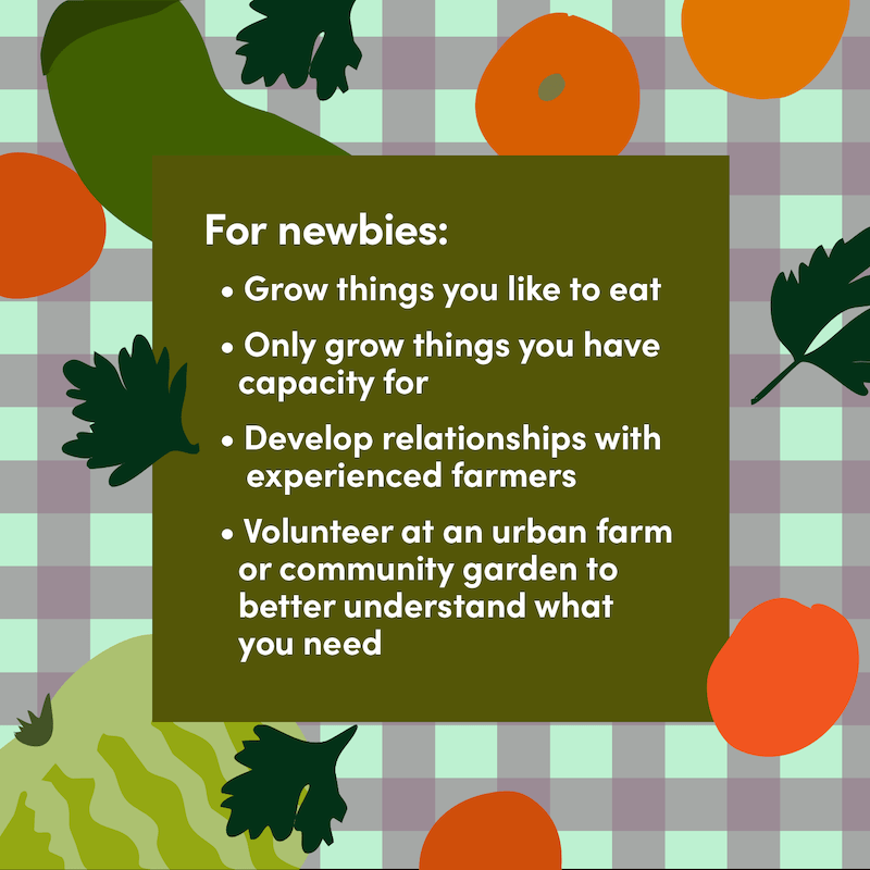 urban farming tips for beginners