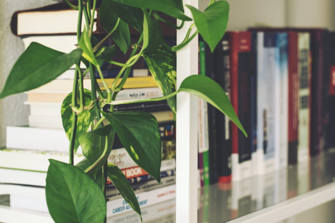 books on a shelf in a home library with plant