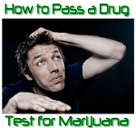 How to Pass a Drug Test for Marijuana – Essential Tips Not Tricks You Must Know!
