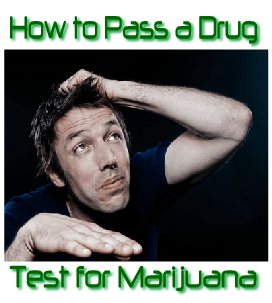 How to Make a Drug Test for Marijuana Logo