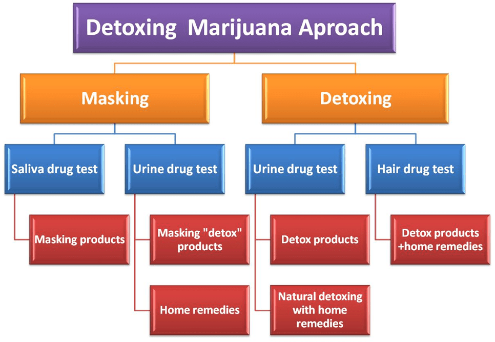 Detox Marijuana Which Approach Is Best For You Detox