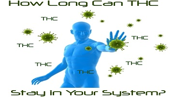 How long can THC stay in your system