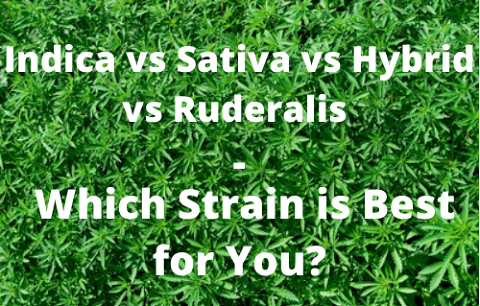 Indica vs Sativa vs Hybrid vs Ruderalis – Which Strain is Best for You?