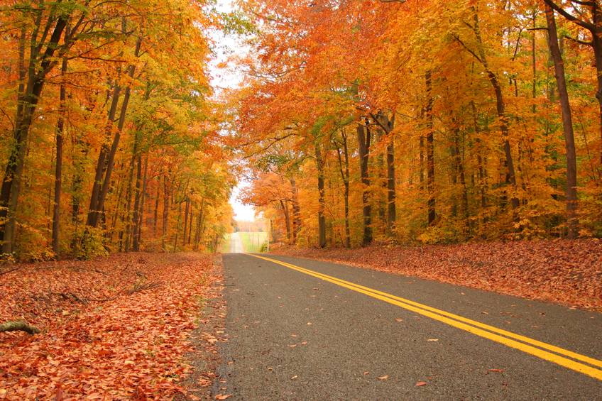 Pure Michigan Fall Wallpaper Fall Color Tour Best Roads Peak Dates To See Fall Colors
