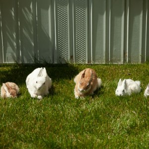 Family of Bunnies