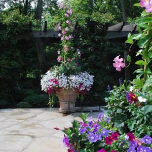 planted Italian terra cotta pot