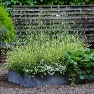 planted galvanized pan