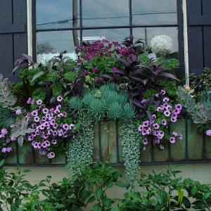 planted window box (1)