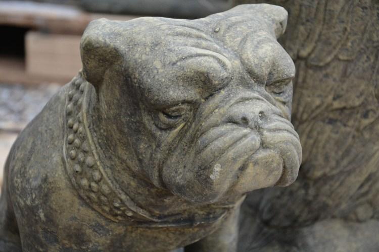 Bulldog Detail