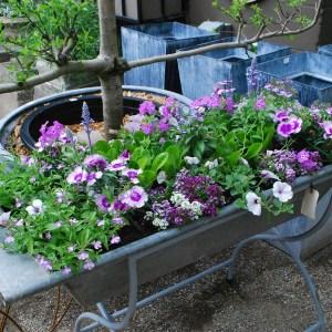 Galvanized Container Planting