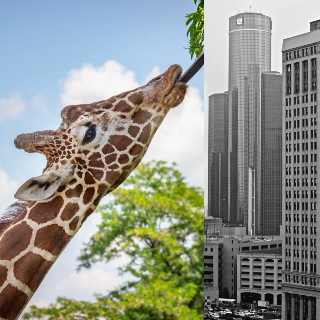 From the Renaissance Center to the Hudson's Site, Which One's Taller? 1