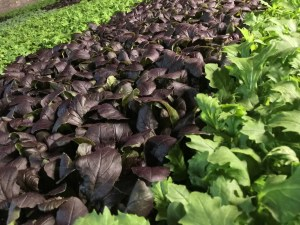 RecoveryPark produce