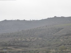Settlement just beyond olive trees