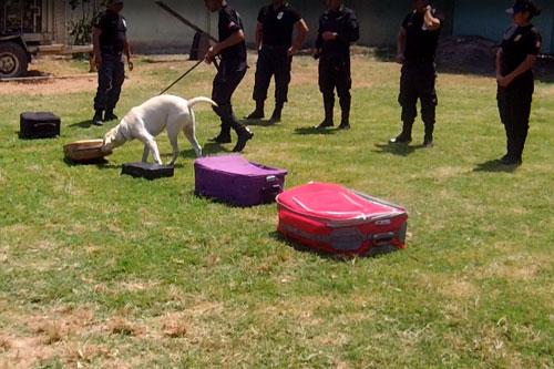 mascota-de-la-brigada-canina-de-seguridad-ciudadana-de-trujillo-participa-en-curso-antidrogas
