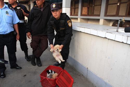rescatan-cachorros-que-eran-vendidos-ilegalmente-en-el-centro-de-trujillo