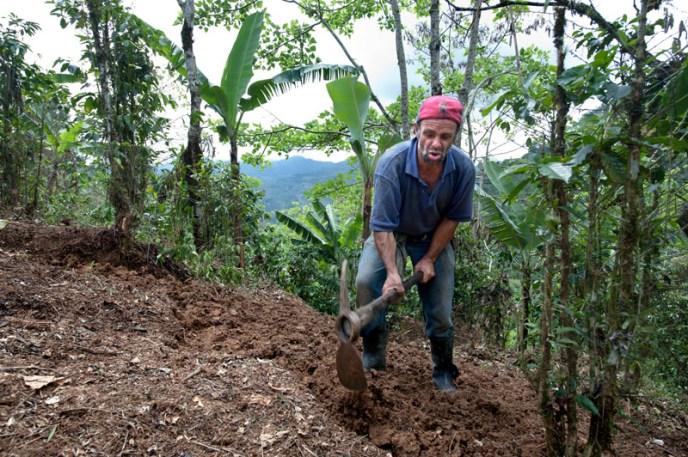 Her skal det plantes kaffeplanter.