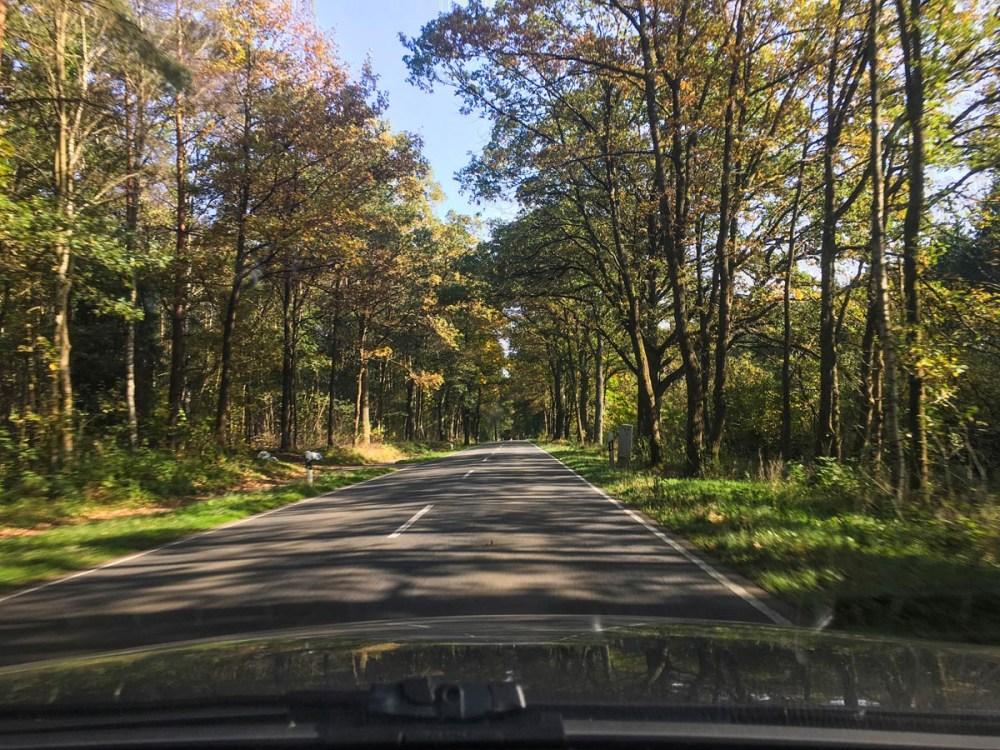 Skog i Tyskland