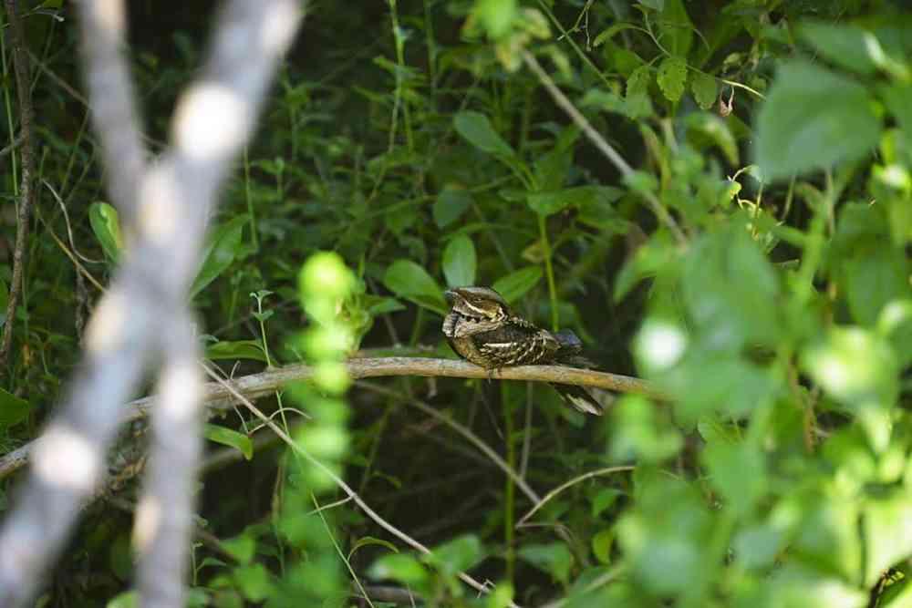 fugl i Sri Lanka