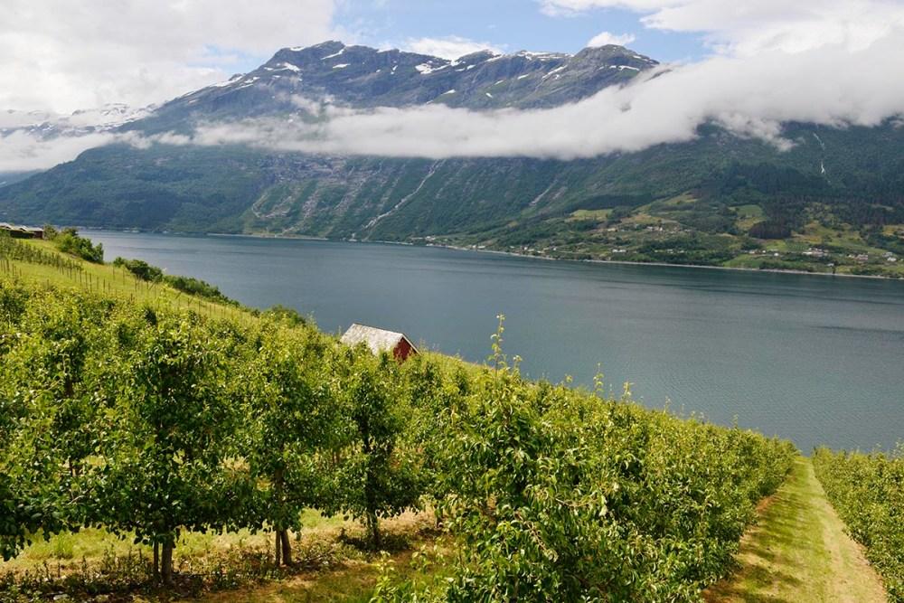 Frukttrær og natur i Lofthus i Hardanger