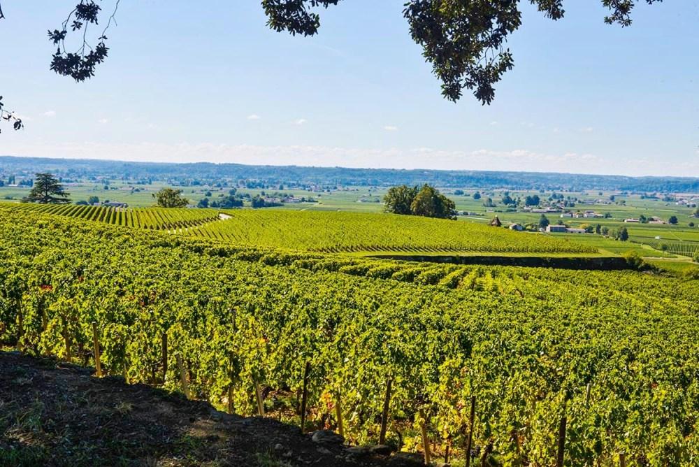 Vinmarker i distriktet rundt Saint-Emilion i Bordeaux