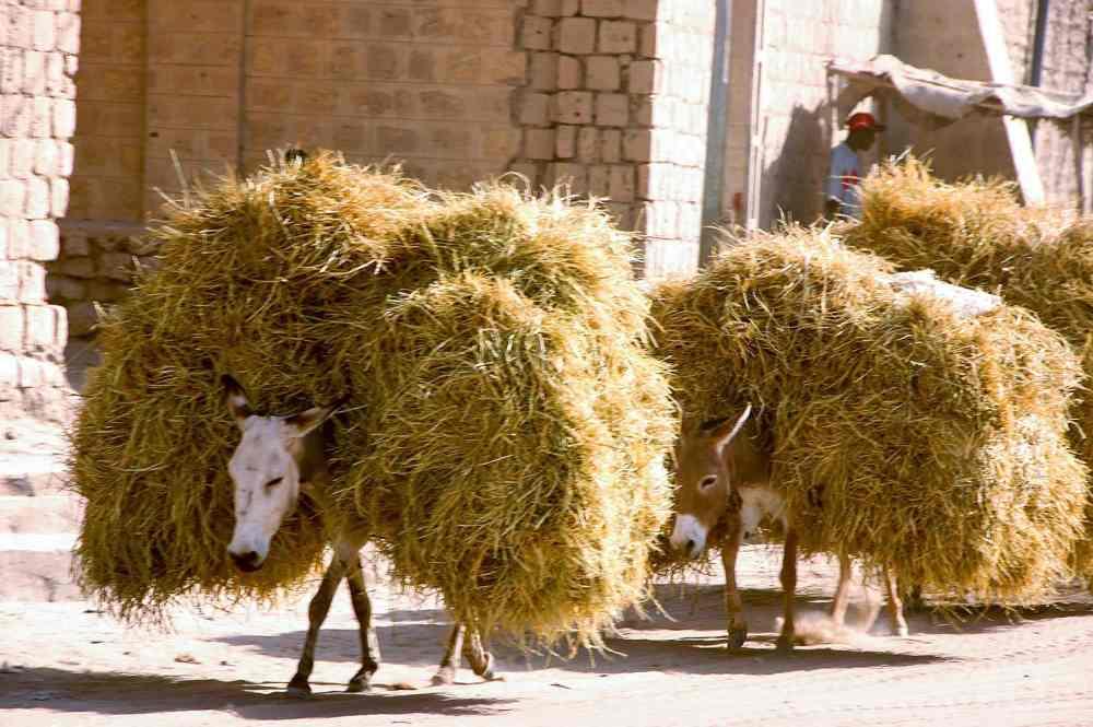 Esler i Timbuktu