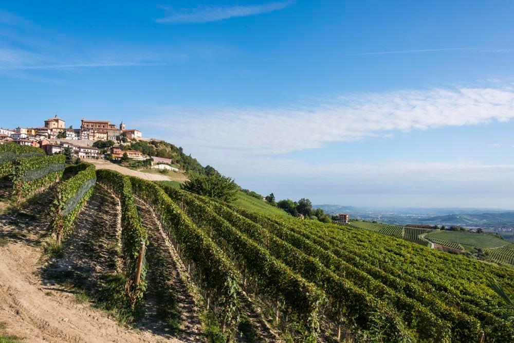 La Morra og vinranker fotografert under en vintur i PIemonte