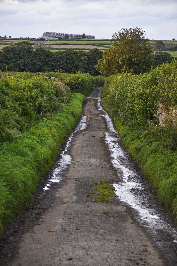 vei mellom to jorder i Somerset