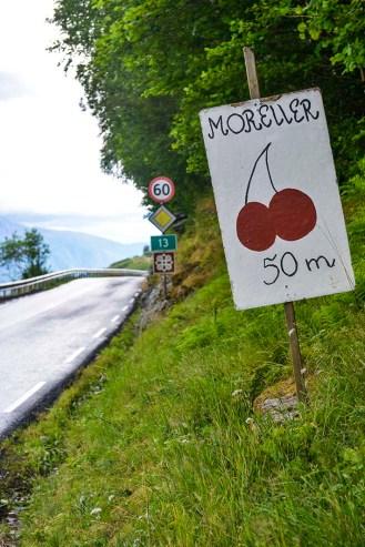 salg av moreller i Hardanger
