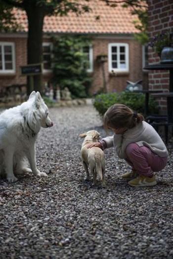 barn klapper hunder på bondegård i Danmark