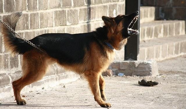 Cão barulhento e mal educado pode dar prejuízo