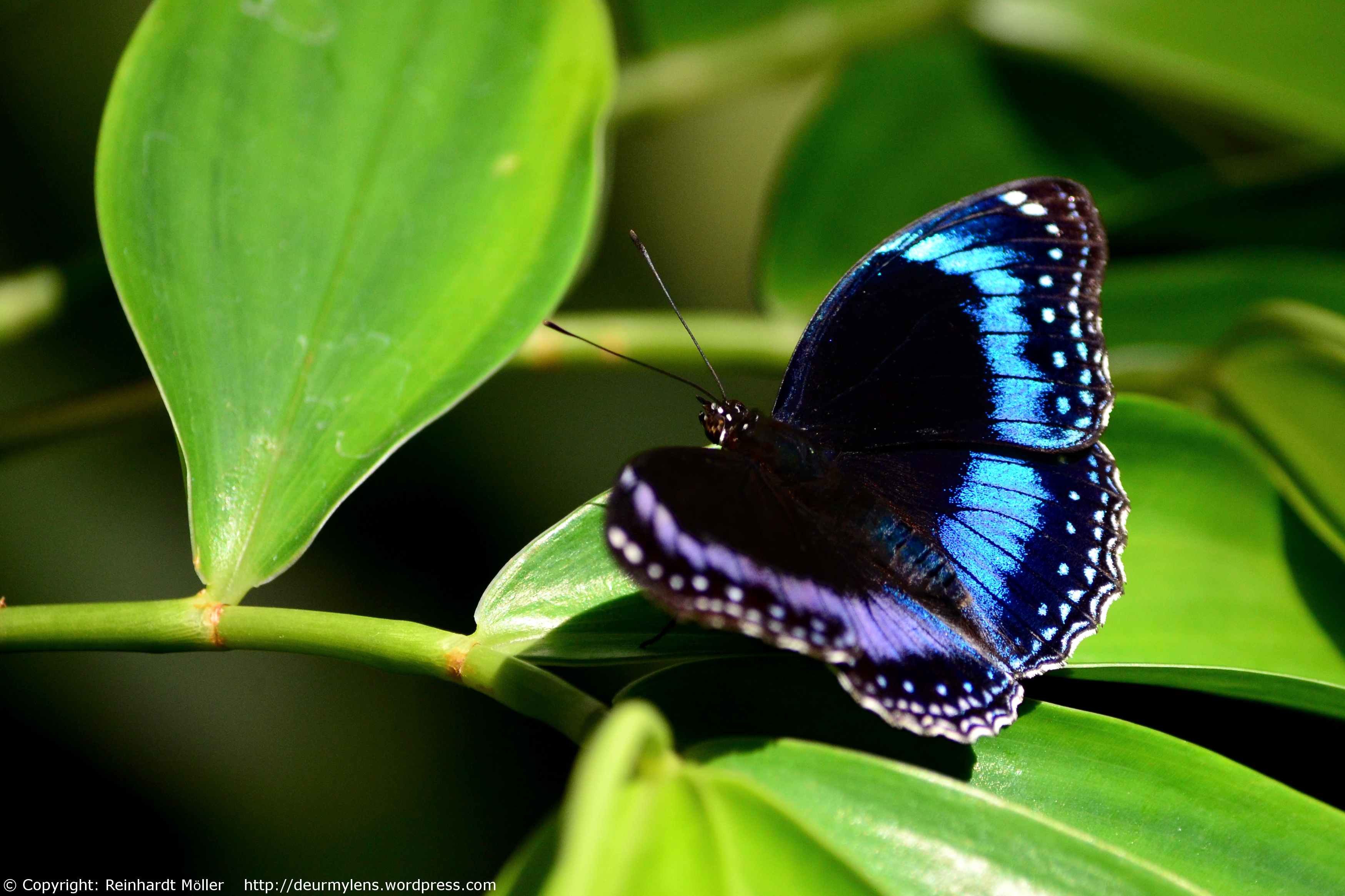 Blue Fairydustsprinkled Butterfly  Through My Lens