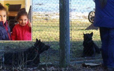 ألمانيا : كلاب شرسة تهاجم عائلة سورية و تتسبب بإصابات خطيرة لطفلتين