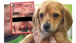 ألمانيا : ستيني يفارق الحياة بعد أن قام كلبه بلعق وجهه