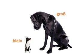 elparts hunde - groß und klein