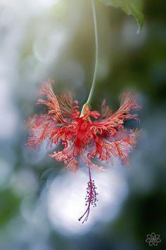 Schöne Fotografien aus der Natur.