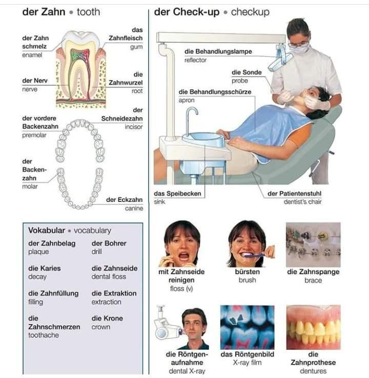 der Zahn ;der Check-up