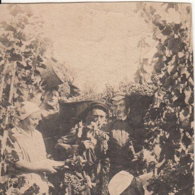 1932 Weinlese