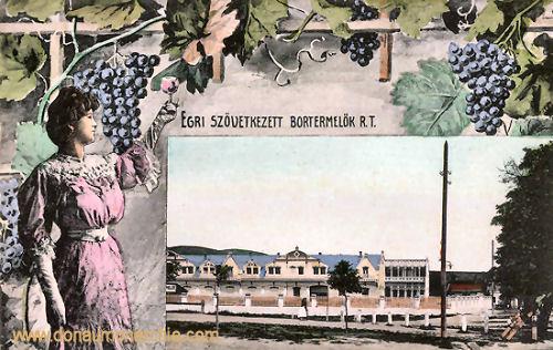 Erlau (Eger), zövetkezet Bortermelök (Weingut)