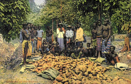 Kakaoernte mit Bali-Weyboys