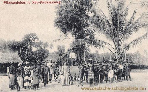 Deutsch Neu-Guinea, Pflanzerleben in Neu-Mecklenburg