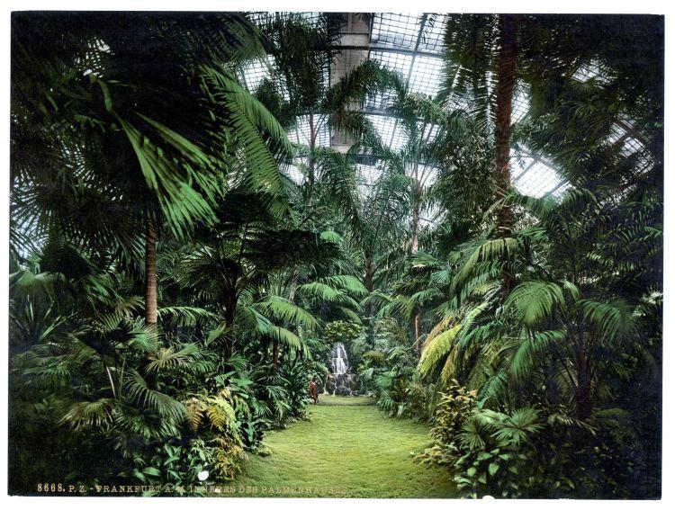 Frankfurt a. M. Inneres des Palmenhauses